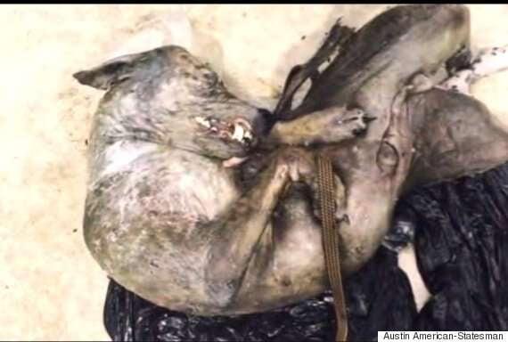 Homem captura e mantém suposto chupa-cabra em geladeira