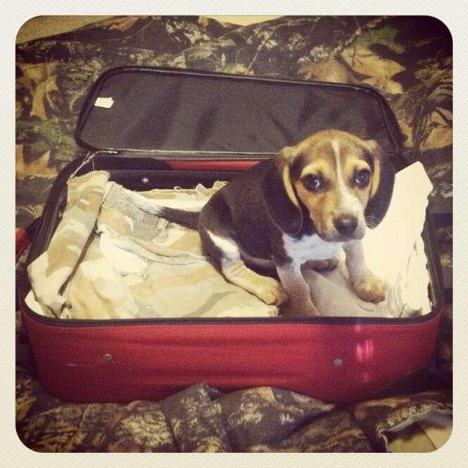 Animais desapontados por não poderem viajar com os donos