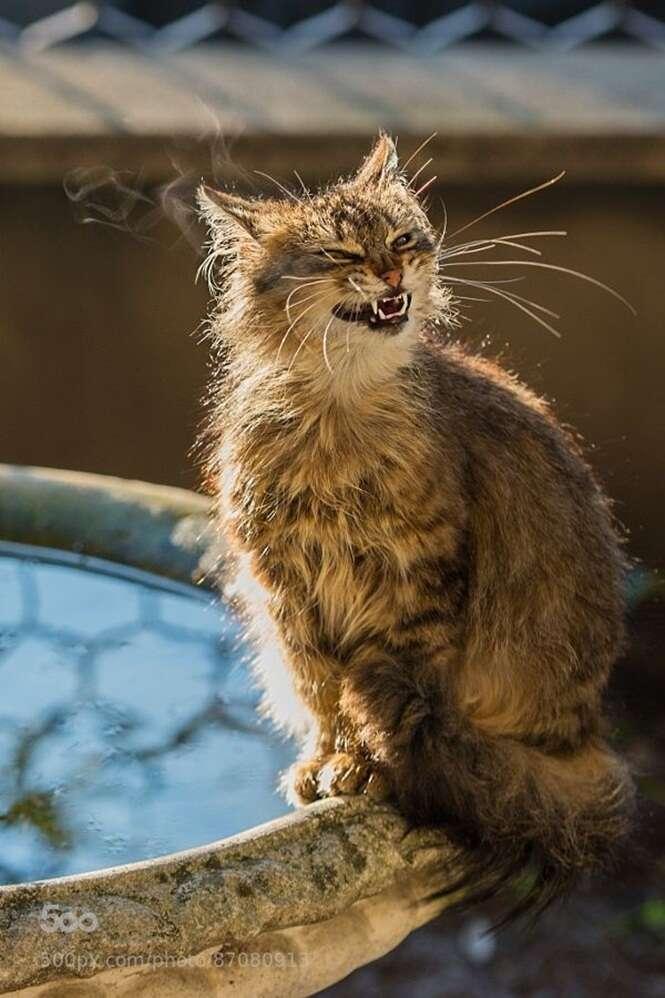 Fotos divertidas de gatos que não conseguem esconder o que estão sentindo