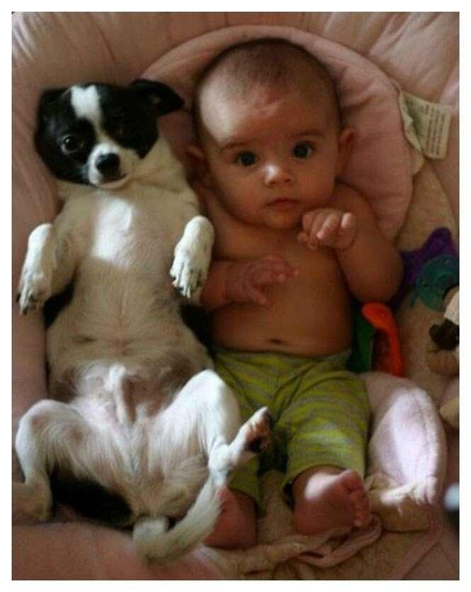 Fotos adoráveis de crianças com seus animais de estimação