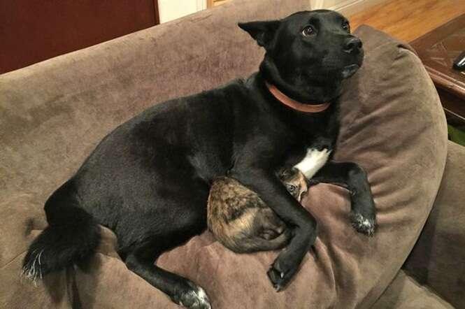 Cão é flagrado protegendo gatinho de sons de trovão e relâmpago e imagem repercute na internet