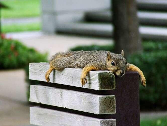 Esquilo fica bêbado após entrar em bar e causa prejuízo de 1.500 reais