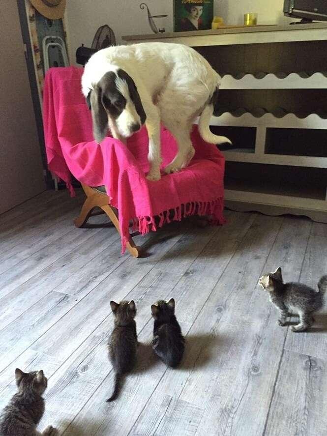 Gatos que mostram para os cães quem é que manda na casa