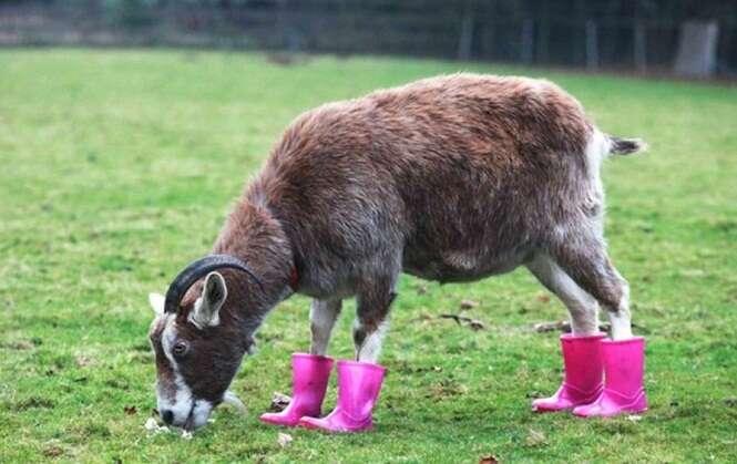 Animais que ficaram ainda mais fofos usando calçados