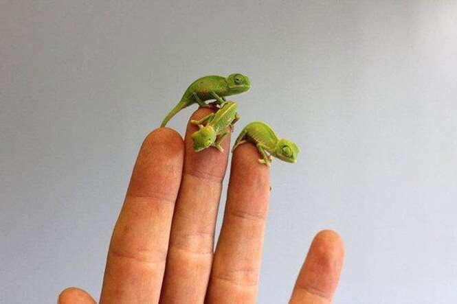 Animais minúsculos que vão te encantar