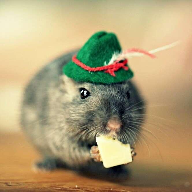 Fotos fofas de animais usando chapéus