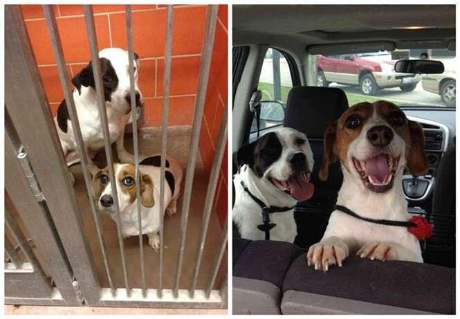 Cães abandonados que não conseguem esconder a alegria após serem adotados