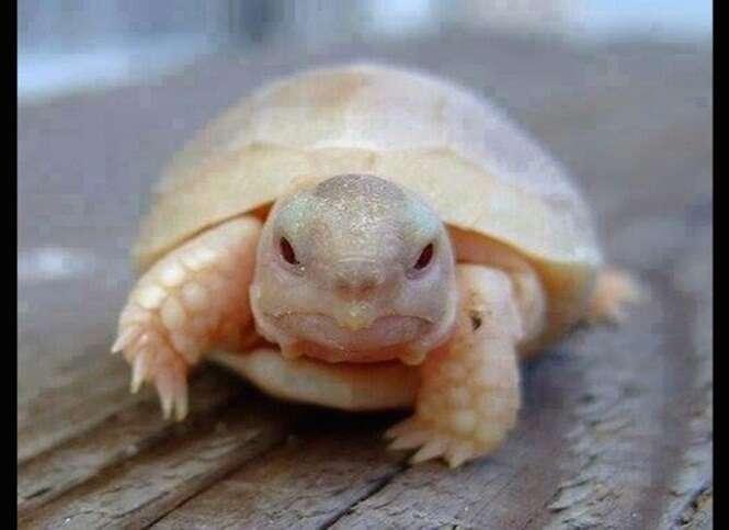 Fotos fofas de tartarugas para deixar seu dia melhor