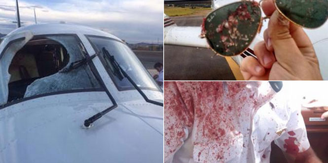 Pilotos e passageiros ficam cobertos de sangue e tripas depois de aeronave se chocar contra pássaro