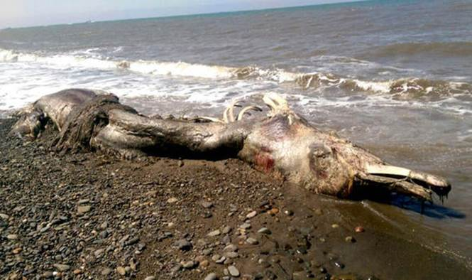 Monstro marinho