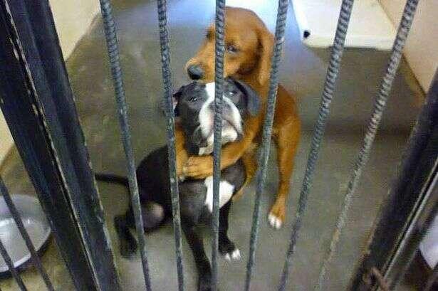 Cães prestes a serem sacrificados em abrigo são adotados e escapam da morte após serem flagrados abraçados