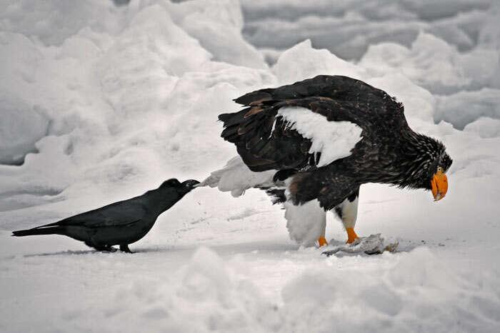 Aves que adoram puxar a cauda de outros bichinhos