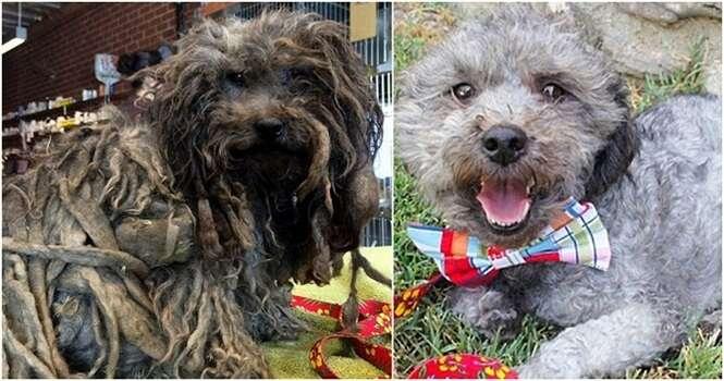 Antes e depois de adoção de cães que mostram como o amor cura tudo
