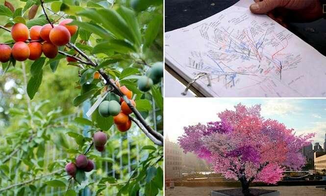 Conheça a árvore com mais de 40 frutos