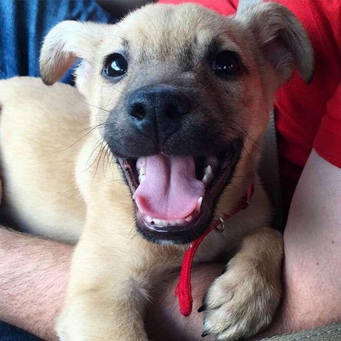 Animais felizes que não conseguem parar de sorrir