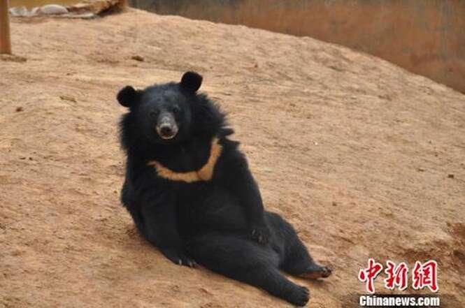 """Homem compra filhotes de """"cão"""" e após 2 anos animais se tornam ursos"""