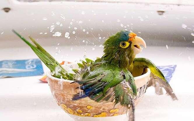 Fotos engraçadas de animais durante o banho