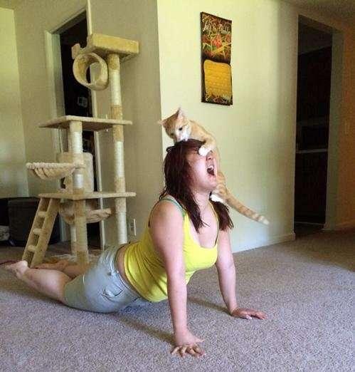Gatos que definitivamente não gostam de yoga
