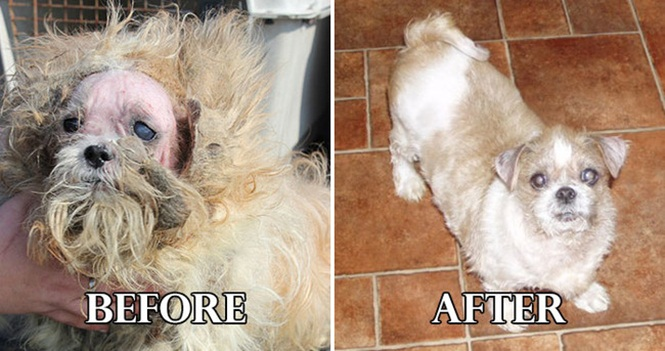 As mais incríveis transformações de animais abandonados