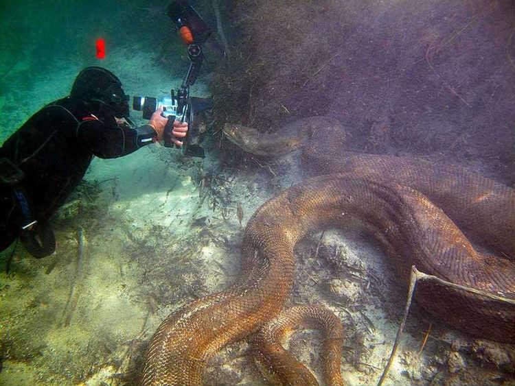 Criaturas aquáticas