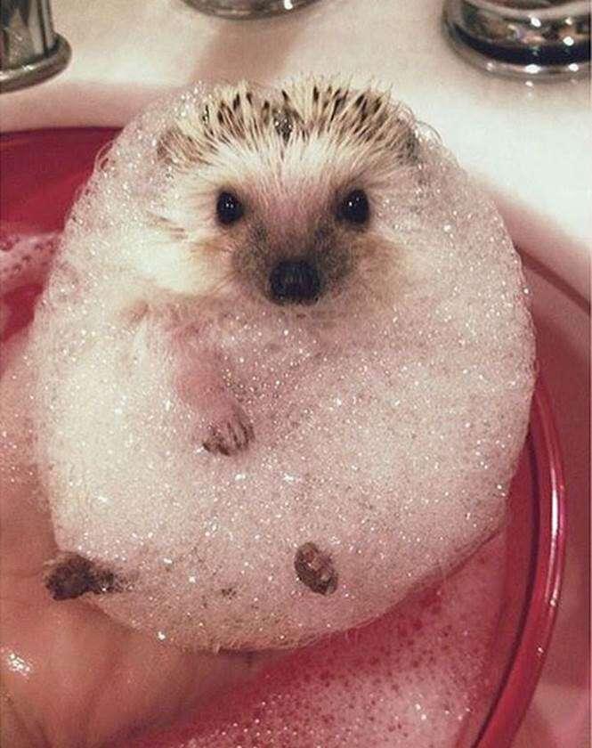 Animais no banho