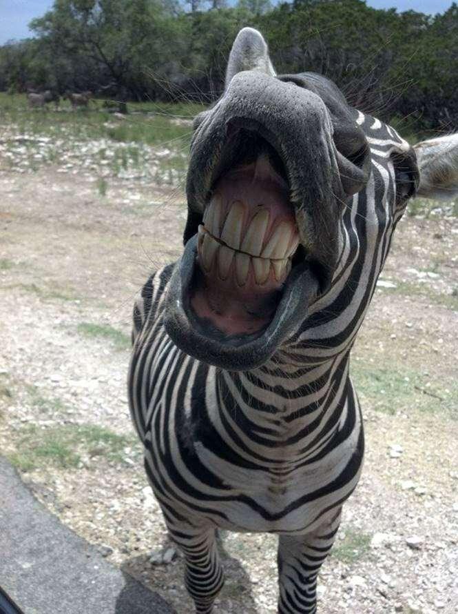 28 fotos que demonstram que os animais selvagens não são
