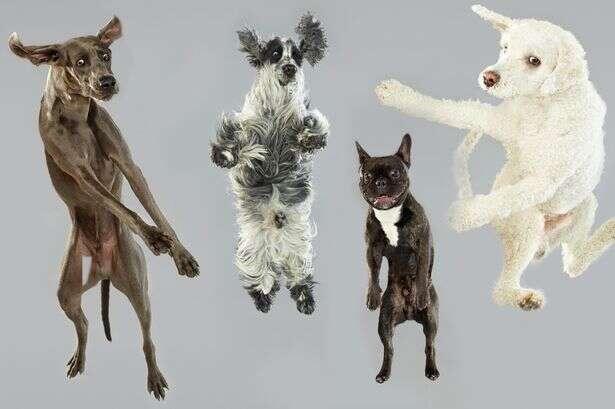 Imagens fofas de cães em queda livre