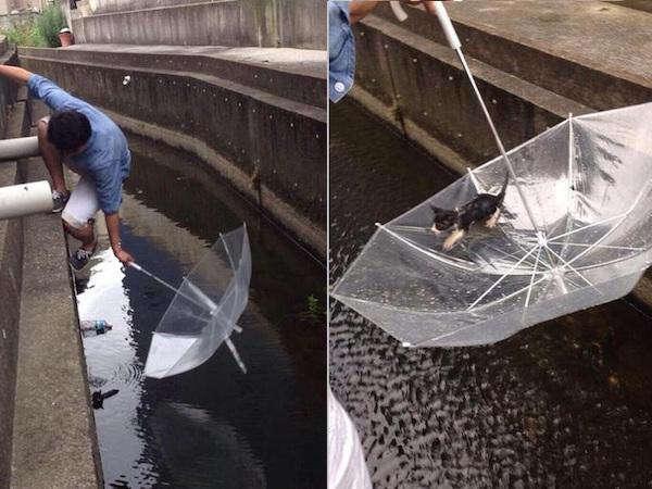 Animais em apuros que foram salvos por pessoas