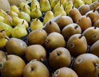 Comer pera reduz consideravelmente efeito da ressaca e diminui níveis de álcool no sangue, revela cientistas
