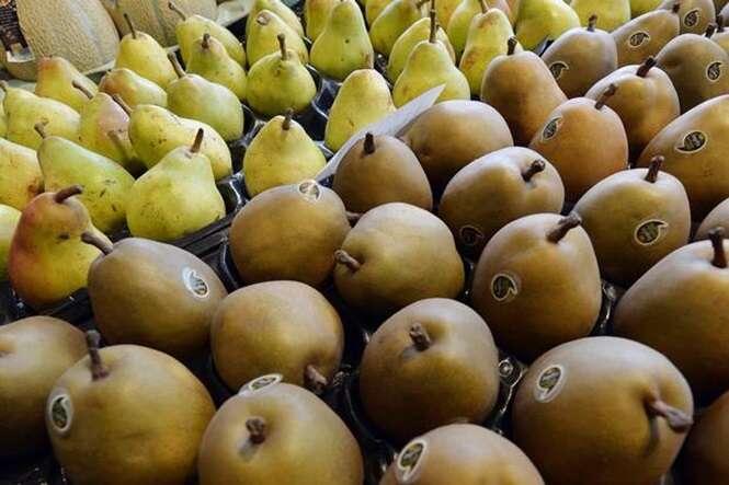 Comer pera reduz consideravelmente efeito da ressaca e diminui níveis de álcool no sangue