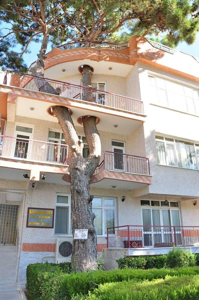 Casas provando que não é preciso cortar árvores para construir algo bonito