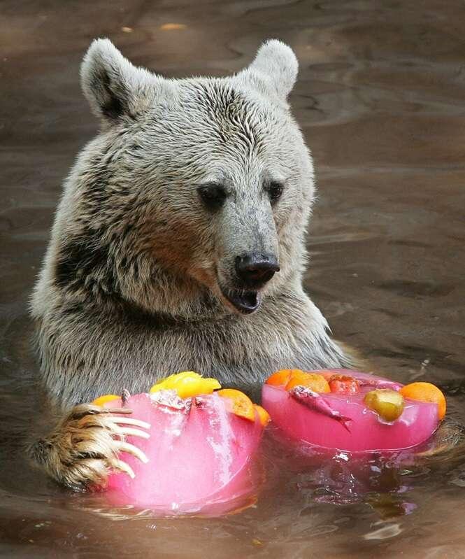"""Animais se refrescando no verão com seus """"picolés"""""""