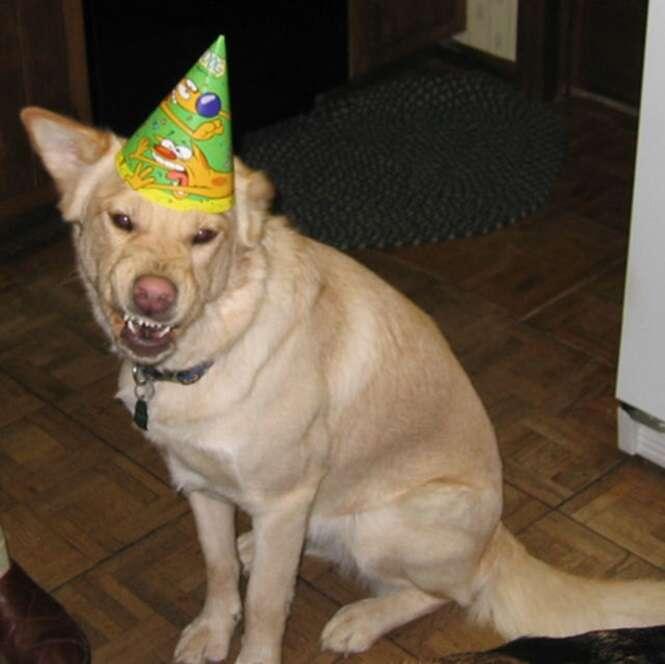 Cães que não estão de bom humor