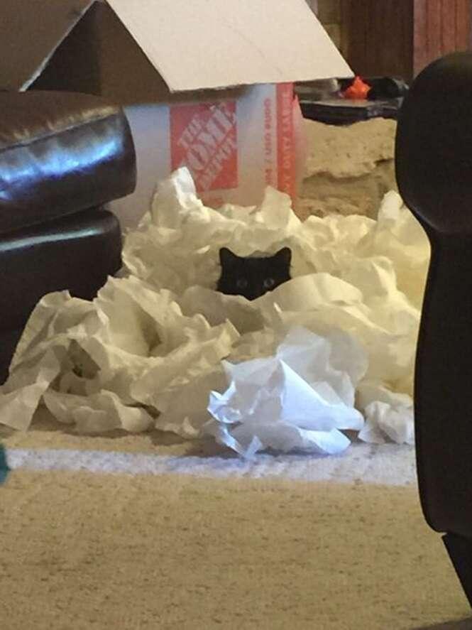 Animais de estimação que não sabem brincar de esconde-esconde