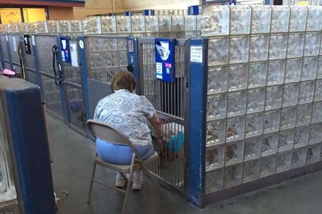 Mulher comove internautas ao ser vista lendo histórias para cães em abrigo