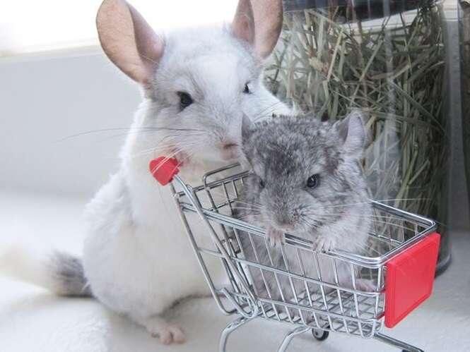 Animais que adoram sair às compras