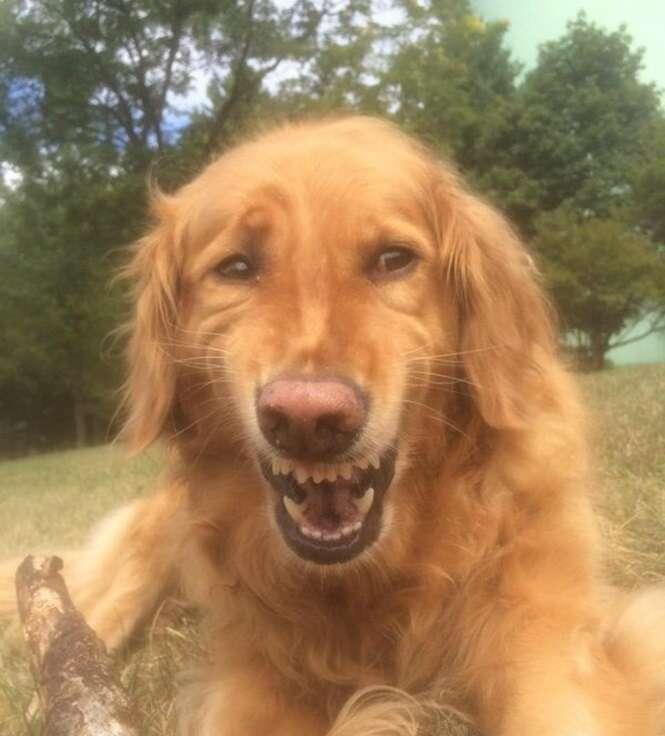 Cães com reações bem estranhas