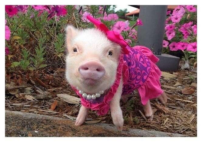 Os porquinhos mais elegantes que você já viu