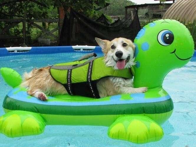 Cães que adoram o calor