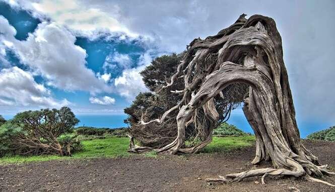 As mais estranhas árvores encontradas pelo mundo