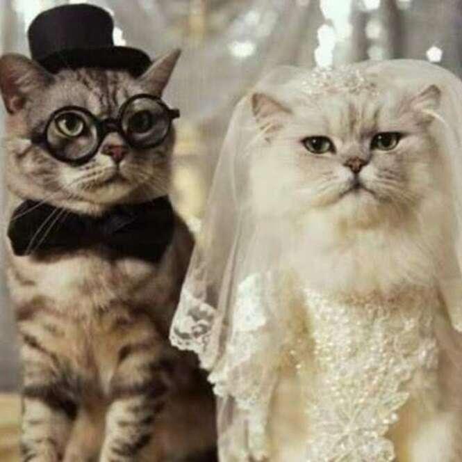 Casais de animais que vão derreter seu coração