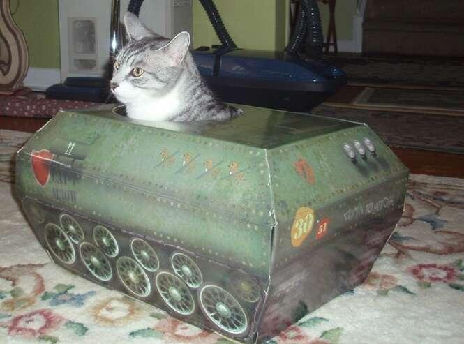 As mais engraçadas fotos de gatos em caixas