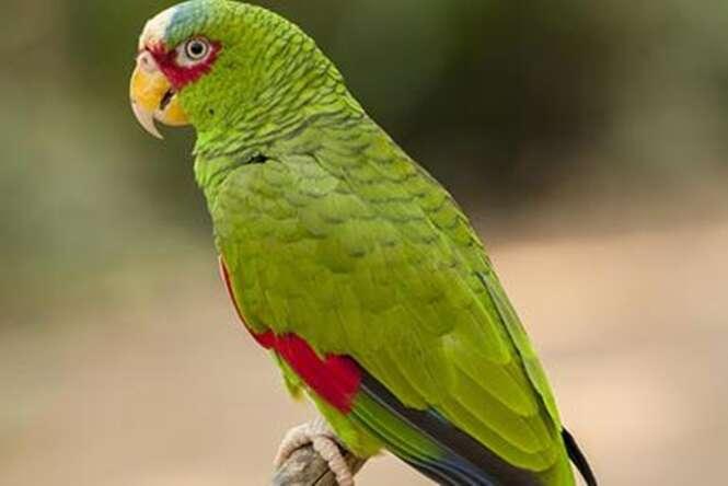 Papagaio e preso por xingar idosa