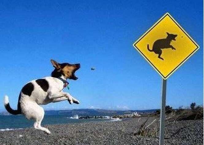 Fotos divertidas de animais