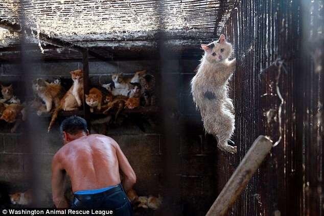 Imagem de gato tentando escapar do abate em festival chinês o salva da morte