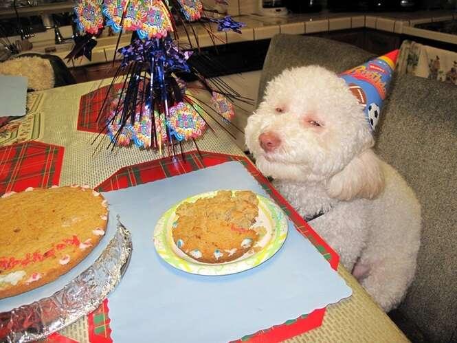 Fotos divertidas de animais comemorando seu aniversário