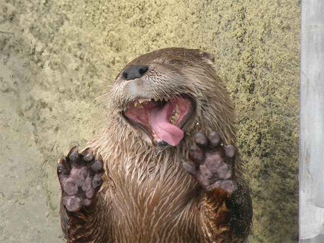 Fotos divertidas de animais brincando com vidros de janelas