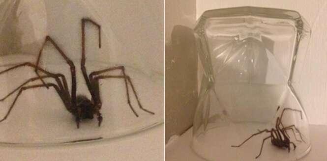 Aranhas do tamanho de ratos estão invadindo a Grã-Bretanha