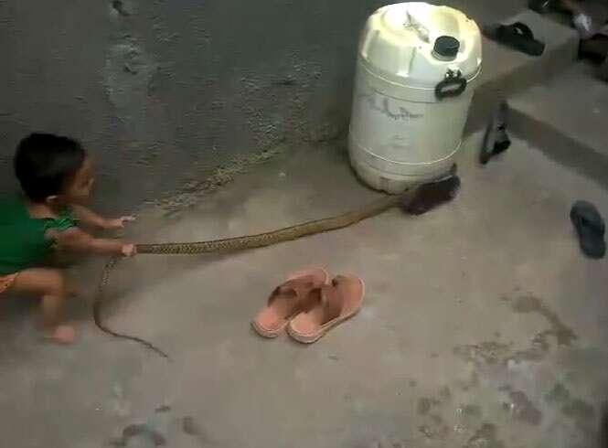 Vídeo flagra menina pequena brincando com enorme cobra