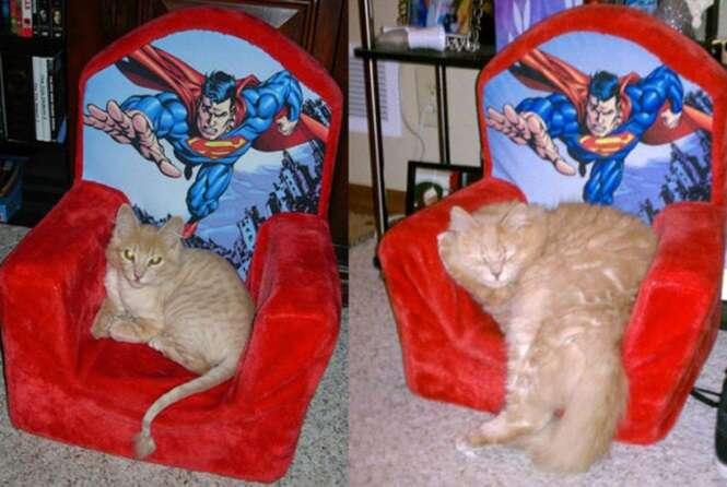 Gatos antes e depois de crescerem